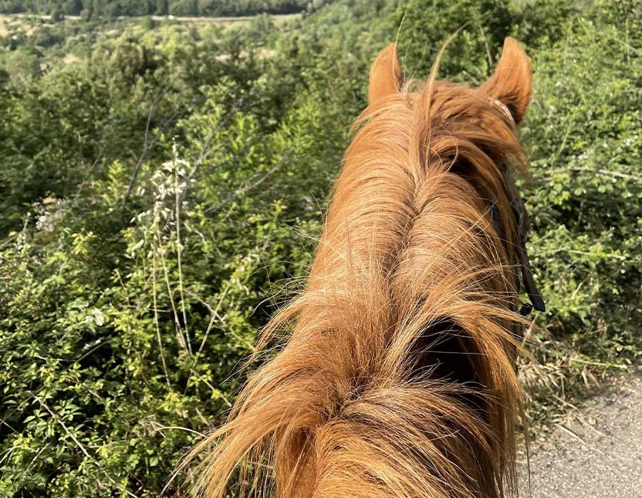 escursione a cavallo3
