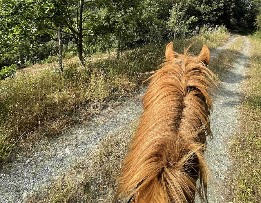 escursione a cavallo4